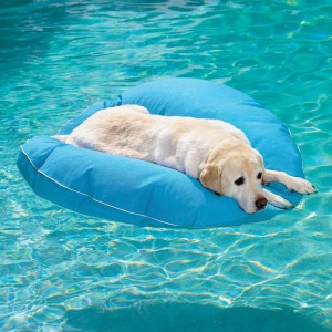 dog-pool-float-1