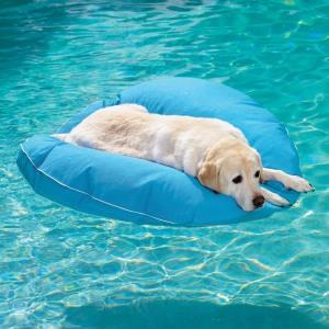 dog-pool-float-1